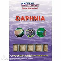 دافني (daphnia)