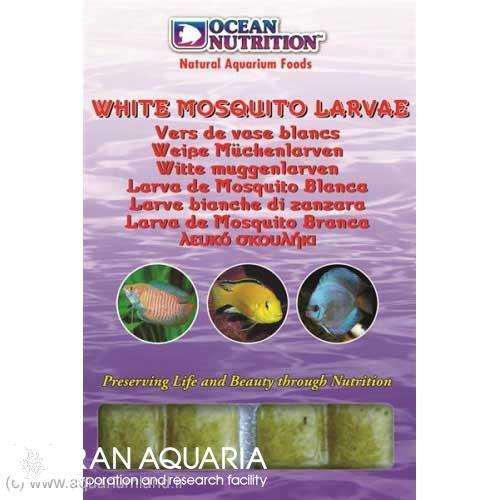 لارو پشه ي سفيد (white mosquito larvae)
