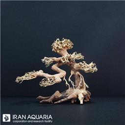 چوب بنسای (bonsai)